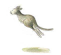 kangaroo21